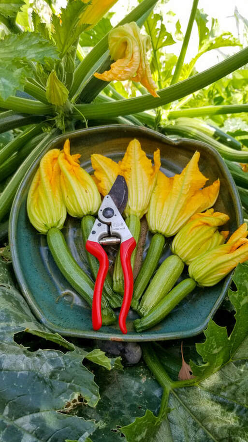 Zucchini Vegetable Garden