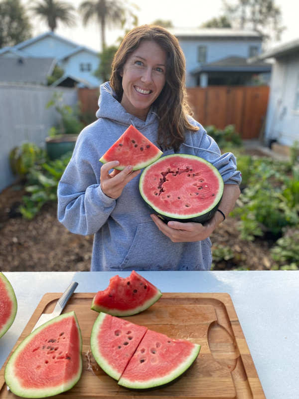 Watermelon Grown in Vegetable Garden